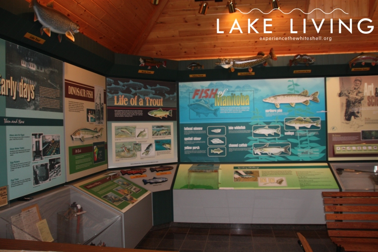 Inside the interpretive centre at the Whiteshell Fish Hatchery.